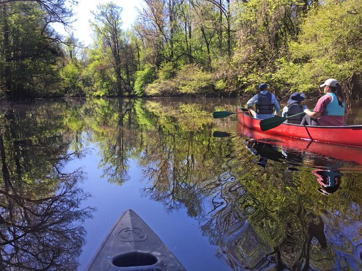 "Take a canoe tour through ""the redwoods of the East"" in Congaree National Park."