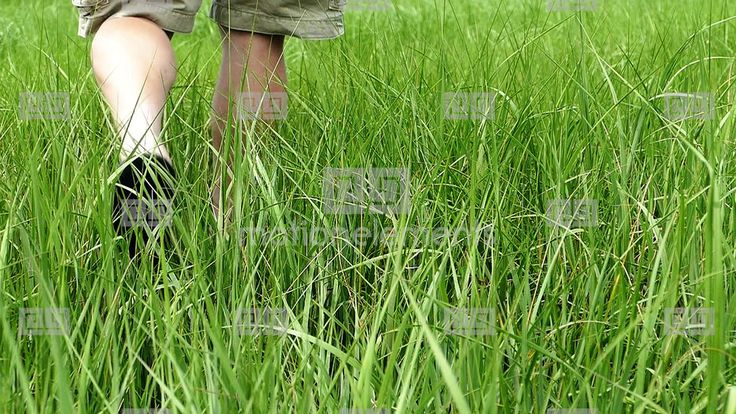 Man Walks Inside Grass Slow Motion Stock Footage | Royalty-Free Stock Image Library | 10316791