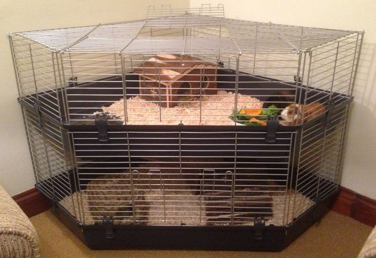 enormous corner guinea pig cage from only