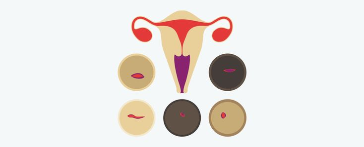 How to find your cervix: the cervix is the lowest part of the uterus. It's a small passageway connecting the vagina to the uterine cavity, about 1–1.5 inches long…