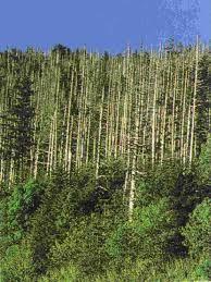 PURIFICACION DE AIRE AIRIFE te dice ¿qué problemas trae la deposición acida? Cuando la acidez es alta mas metales se disolverán en el agua. Esto puede producir contaminación de las aguas superficiales, lo que tiene serios efectos sobre la salud de las plantas y animales acuáticos. Por ejemplo, altas concentraciones de aluminio (Al) pueden complicar la toma de nutrientes por parte de las plantas. Esto hace del aluminio una de las causas previas a la descomposición de los bosques
