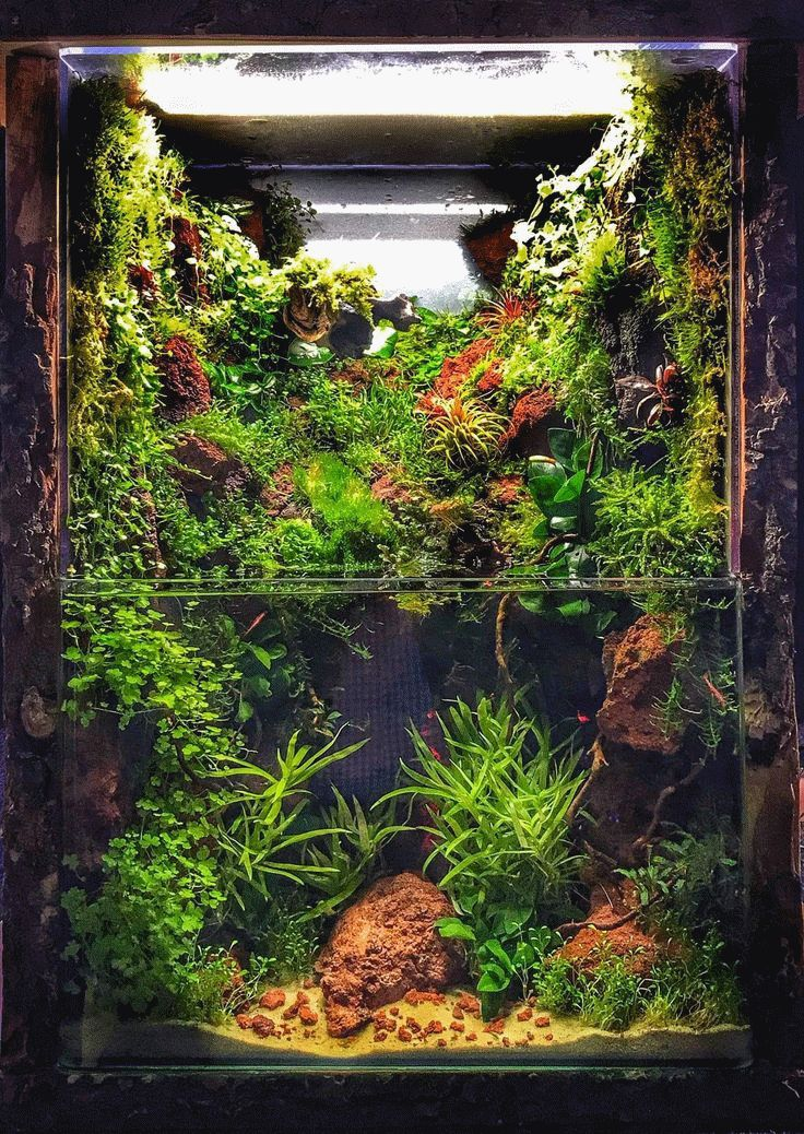 Remarkable Small Aquarium Fish Ideas And Aquascape Designs ...