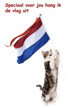 Wenskaart Kat met Nederlandse vlag. Voor verjaardag, geslaagd of andere speciale gebeurtenis