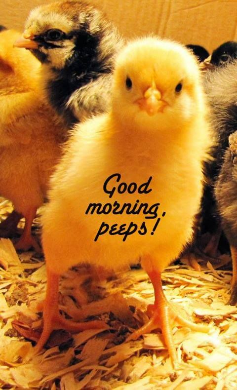 good morning peeps! May all be well in your domain.