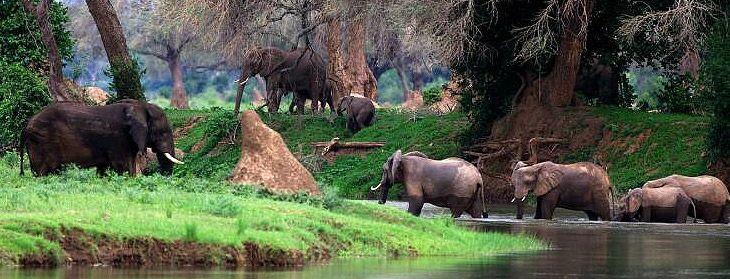Mana Pools National Park | Namibia.