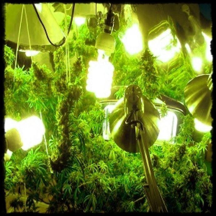 ¿Cómo calcular el consumo eléctrico de tu indoor, para poder tener controlada la factura eléctrica? - http://growlandia.com/marihuana/como-calcular-el-consumo-electrico-de-tu-indoor-para-poder-tener-controlada-la-factura-electrica/