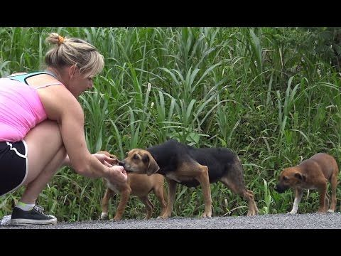 Costa Rica.  Visit this fig rescue in Costa Rica!  Crdogrescue.com. Hope For Paws: Rescuing dogs in the Costa Rican jungles! - YouTube
