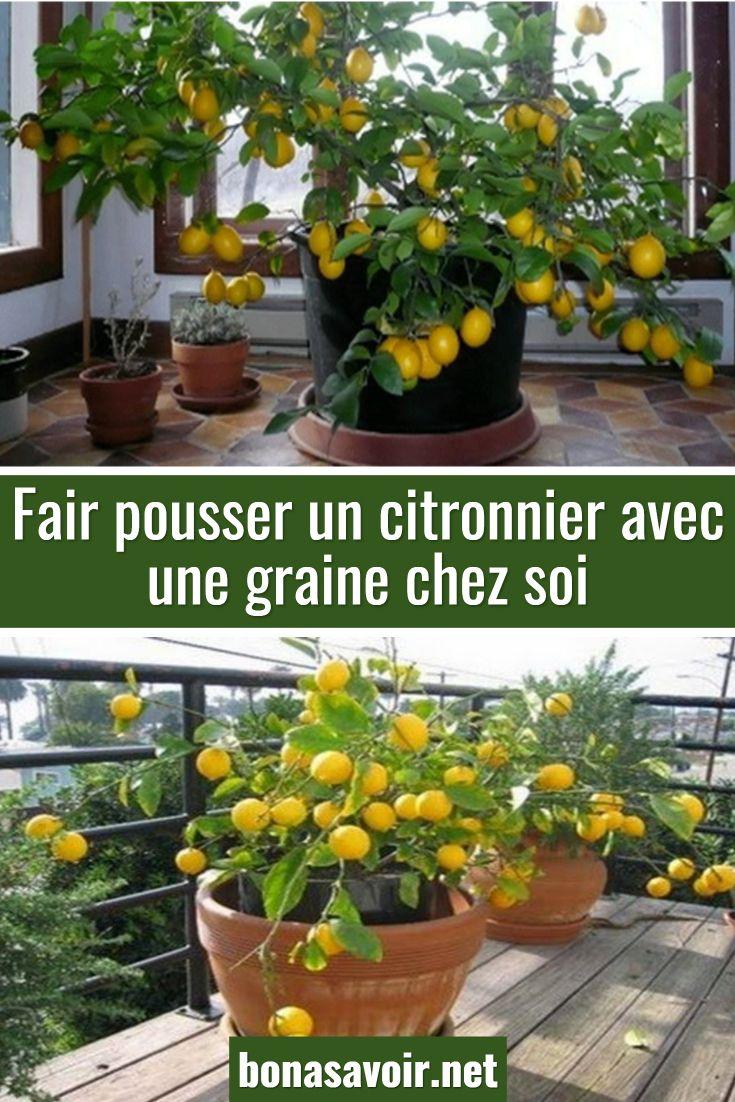 Epingle Par Marie Paule Linotte Sur Jardin En 2020 Culture Des Legumes Trucs Et Astuces Jardinage Faire Pousser Un Citronnier