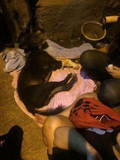 Anjing Malang Ini Disiksa Warga Dituduh Sebagai Partner Babi Ngepet - BUKA INDO