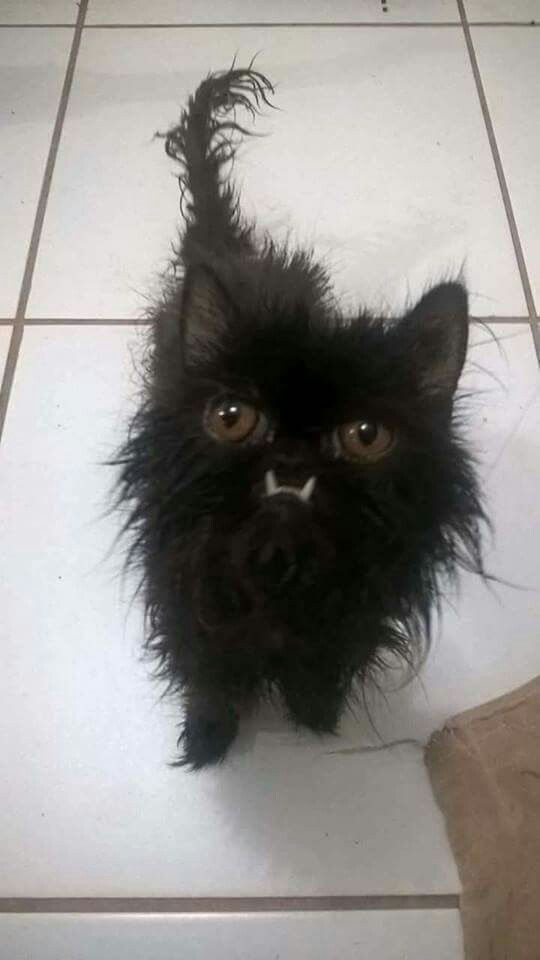 This cat is bedraggled, but so cute.