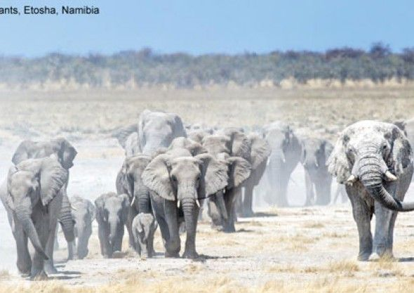 Parade of Elephants, Etosha, Namibia  Check out Peter Delaney's photographs from The Intrepid Explorer's Life through the Lens - www.intrepidexplorer.co.za