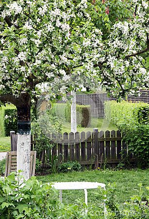 Flowering Ornamental Apple Tree In Ornamental Garden - Download From Over 53 Million High Quality Stock Photos, Images, Vectors. Sign up for FREE today. Image: 84764016