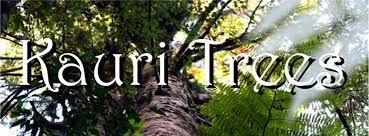 kauri trees - Google Search