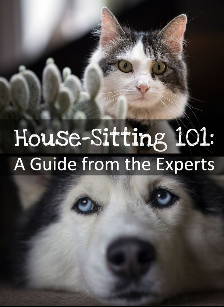 Tips on how to get a job as a house sitter.