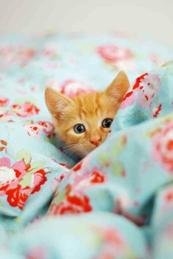 I take nap now!