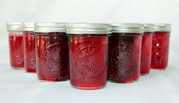 Southern Grapes (Recipe:  Muscadine Jelly)