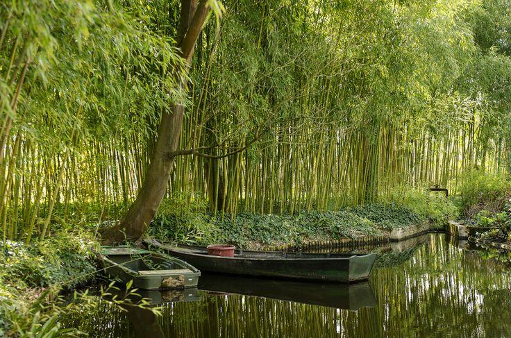 The Water Lily Pond - Photo: Alexander J.E. Bradley - Nikon D7000 - 24-70mm f/2.8 @ 40mm - f/2.8 - 1/160 -ISO 100