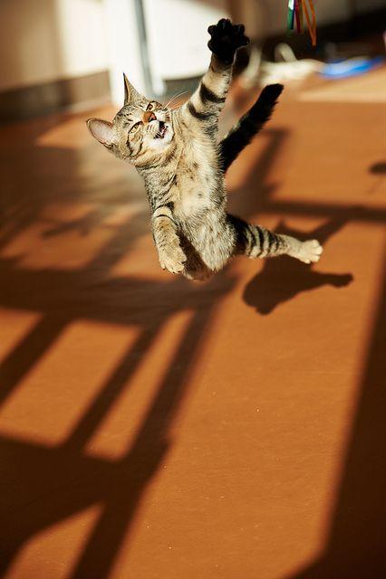 how to housebreak a kitten