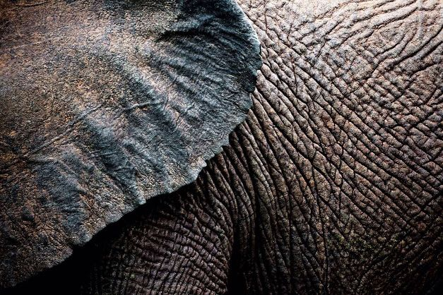 Elephant skin shows texture well