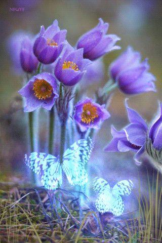 deepsoulfury:   Gif Butterflies - I love everything