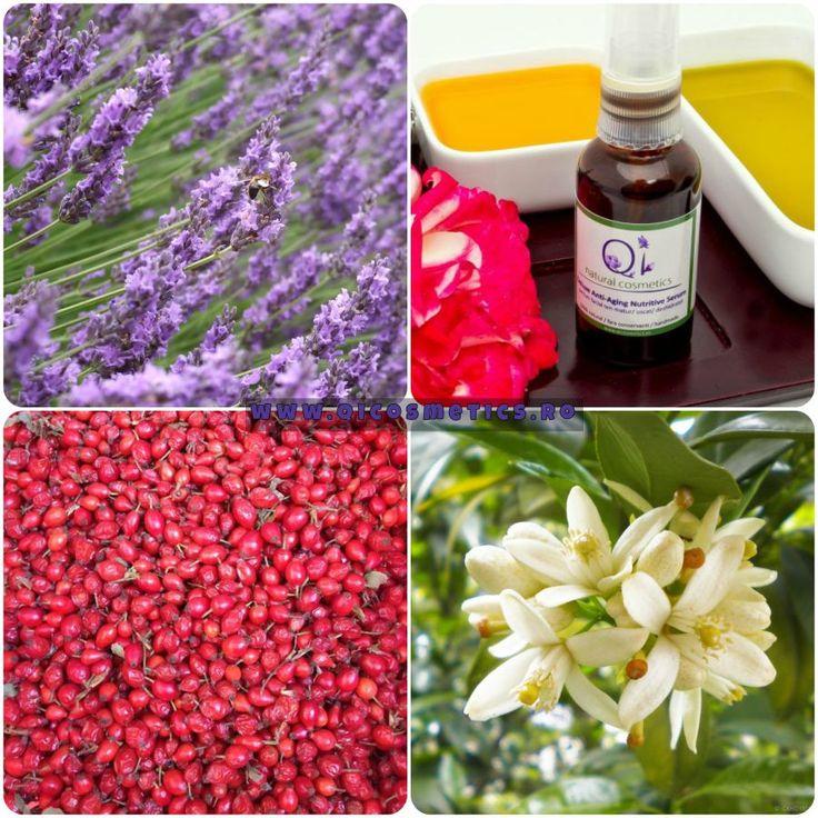 Incearca Serumul Deluxe de la QI Cosmetics - un buchet floral de neroli, lavanda si trandafiri. #neroli #rosehip #lavender