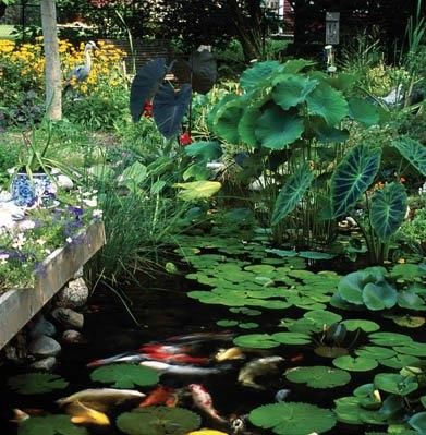 The secret to a low maintenance healthy pond gardens for Maintaining a garden pond