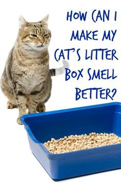 how to make the cat litter box smell better - Litter Boxes