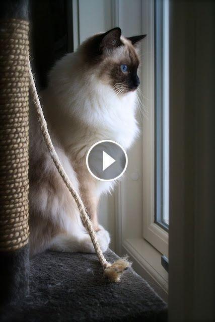 Best Funny Cat Videos 3 Cute Dog
