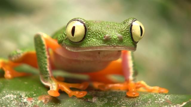 Ecuador is home to over 500 frog species and many face risks from the illegal pet trade. One company thinks it knows how to stop it.