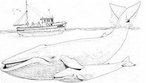 Resultado de imagen para dibujos de ballenas para colorear