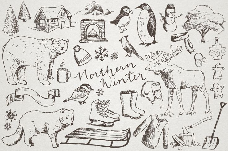 "Hand Drawn Winter Clipart ""Northern Winter"" moose clip art, cold weather clipart, penguin, sled, snow, polar bear, snowflakes, scrapbooking by LemonadePixel on Etsy https://www.etsy.com/listing/224262605/hand-drawn-winter-clipart-northern"