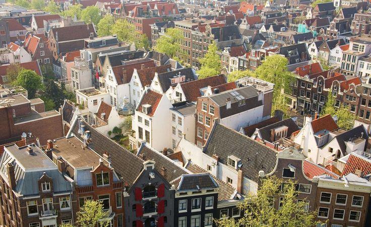 50.000-m2-aan-groene-daken-en-gevels-met-subsidie-voor-VvEs-in-Amsterdam.jpg (1770×1085)