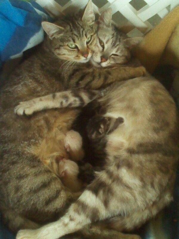 Nonna e mamma gatta,con 6 gattini appena nati.