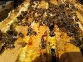 Arı satışı Ana arı Kafkas arı Arı kovanı Arıcılık Arı ilaçları Arı hastalıkları Satılık arı arıcı petek bal kovan arıcıdan arı malzemeleri polen tuzağı propolis arı sütü arıcılık kursu arı fiyatları arı arıcı petek bal kovan arıcıdan