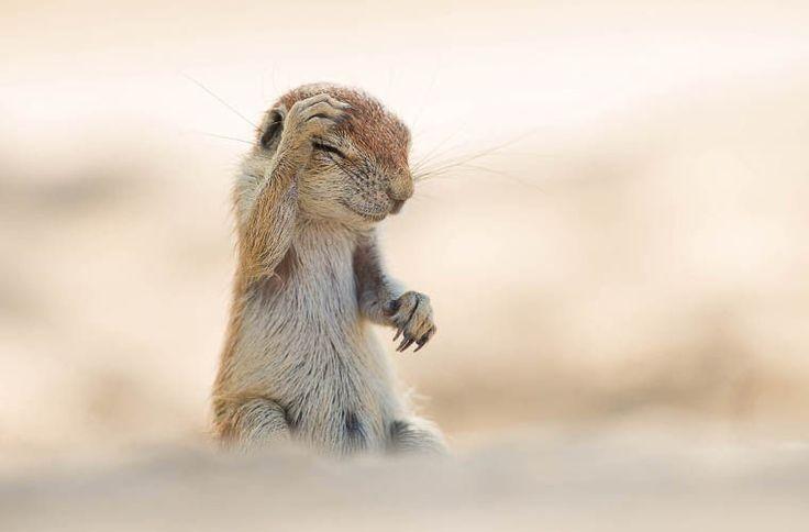 Названы самые смешные фотографии животных 2015 года / Новости / Моя Планета