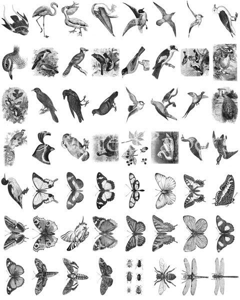 Twisted Papers Vintage Digital Victorian Nature Illustrations,