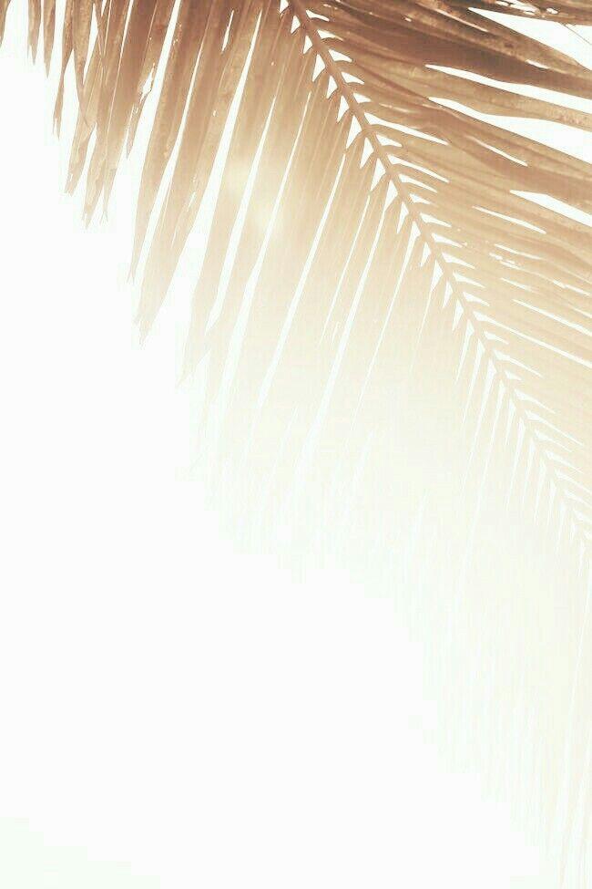 golden palm | Beach | Surf | Fashion | Girls | Lifestyle | Wetsuits | www.saltbeat.com