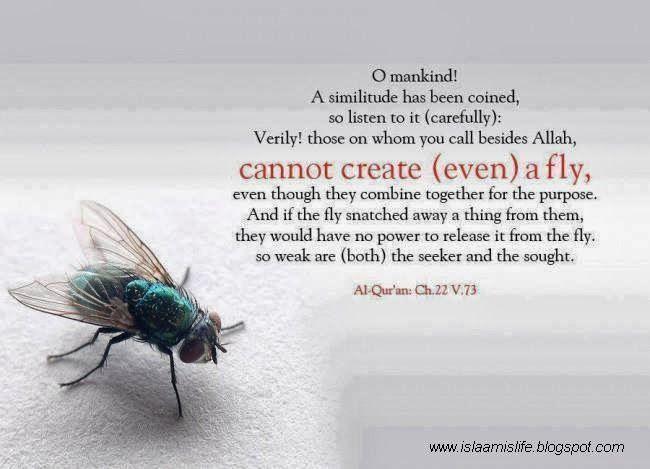 Islam & Science