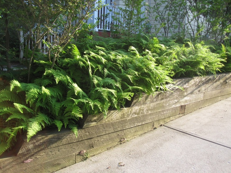 ferns and landscape timbers edge a sloped driveway. falon mihalic