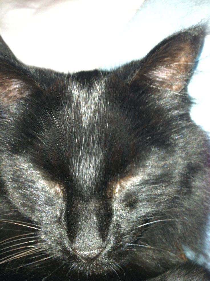 Duncan Animals, Cats