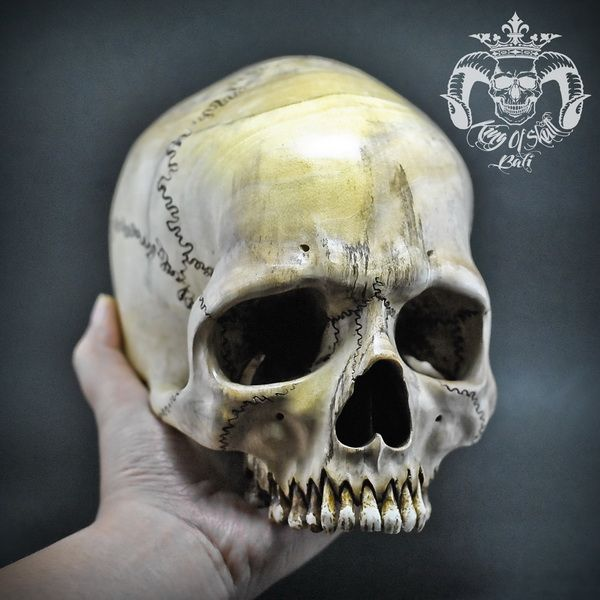 Hand Carved Human Skull Realistic Jawless from Prickly Ash Wood Find this skull on Etsy