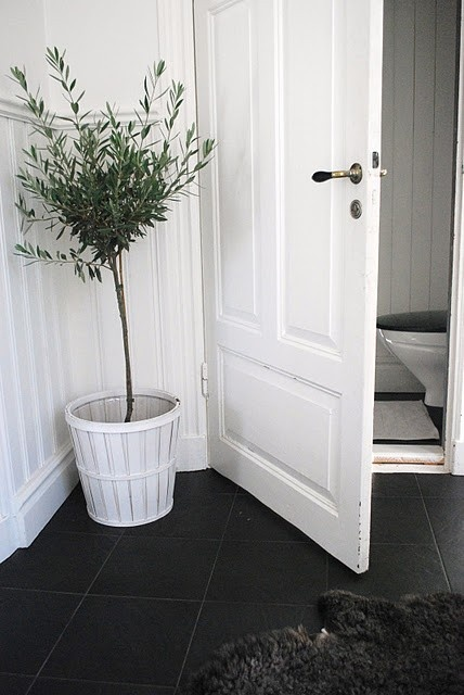 Potted olive tree decor pinterest trees olive tree for Olive bathroom ideas