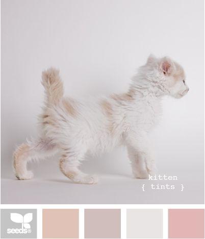 kitten tints: Color Palettes, Design Seeds, Color Schemes, Color Pallett, Kittens Tinted, Soft Color, Nurseries Color, Girls Rooms, Cute Kittens