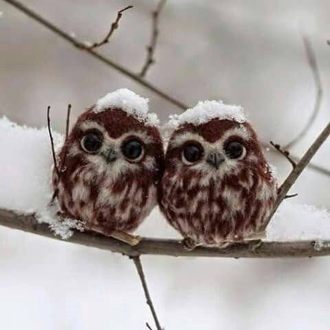 Baby owls:)-- putting good images instead of sea creatures in your mind before bed ;)