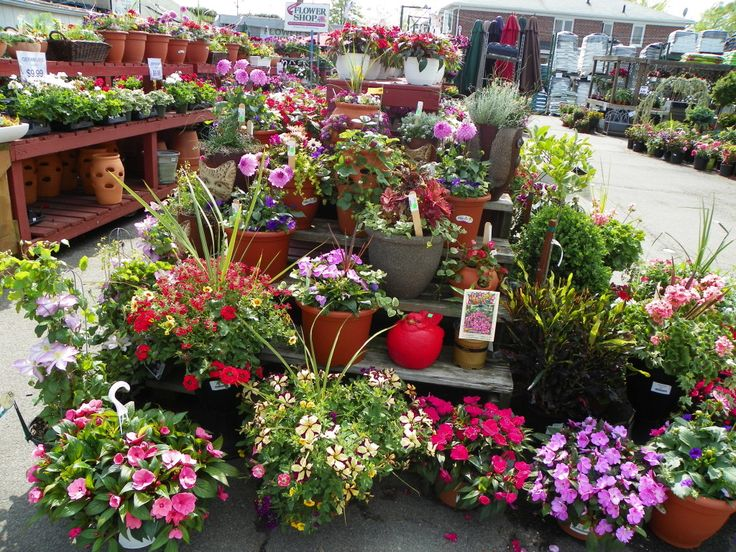Garden World, A Premium NYC Plant Nursery And Garden Supply Company.  Serving New York City U0026 Long Island. Find Out What People Are Saying About  Our Plants.