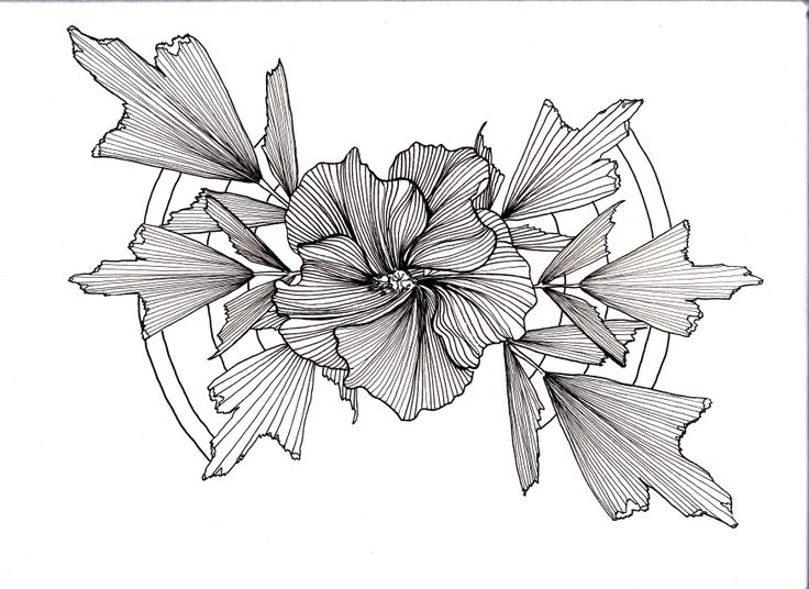 Line Art Hibiscus : Line drawing flowers leaves hibiscus palm