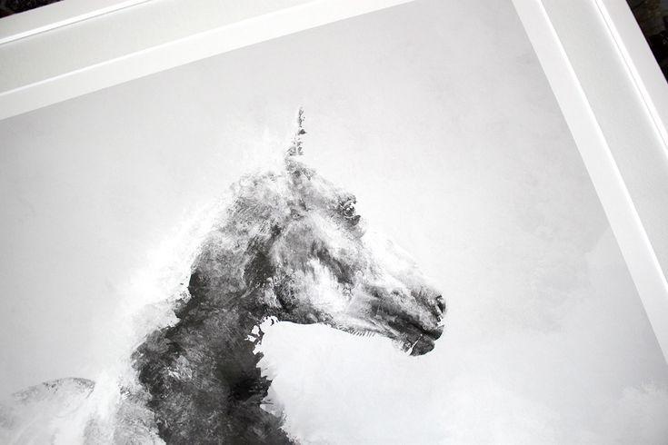 Horse 02 - limited edition print by Magdalena Dymańska / equestrian art