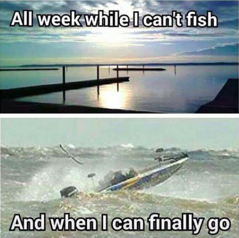 Funny fish memes - photo#45
