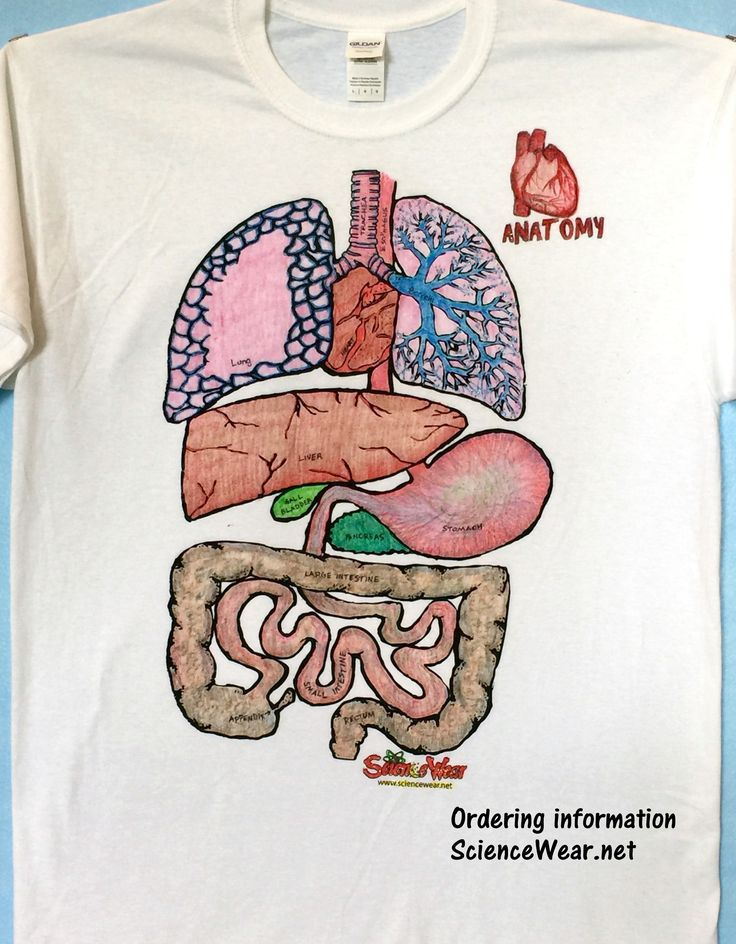 Anatomy project that not only helps students remember organs and their functions, but is a huge hit with the students!  Affordable for all.  Find out more, including ordering information at http://sciencewear.net/guts.html