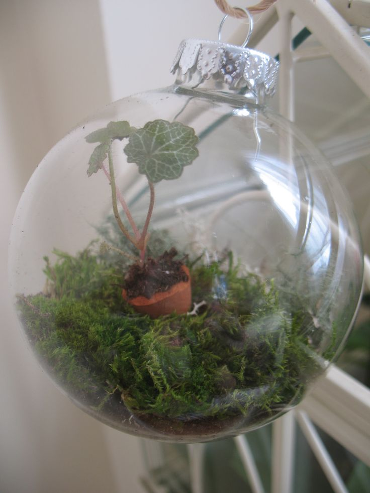 Glass ornament Terrarium. Talk about a fun ornament! I think we should  start selling - 29 Best Terrarium Love!!! Images On Pinterest Terrariums